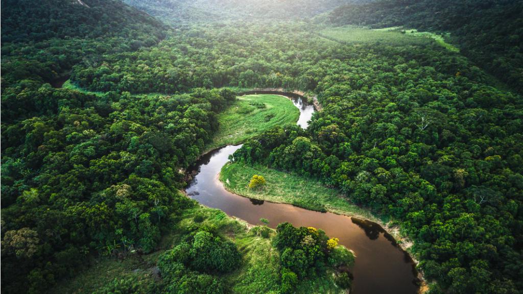 ¿Para quiénes es, o no es querida la «Querida Amazonía»?
