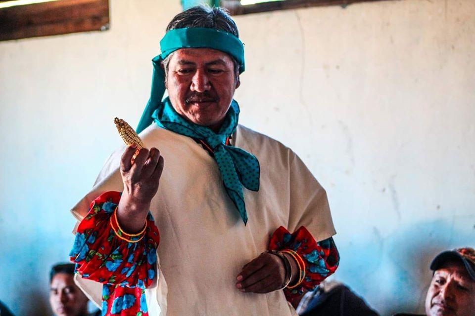 Muere Pedro Turuséachi, rarámuri defensor del maíz nativo