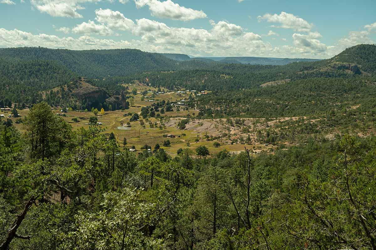 Urge retomar los saberes indígenas para el manejo forestal en la Tarahumara