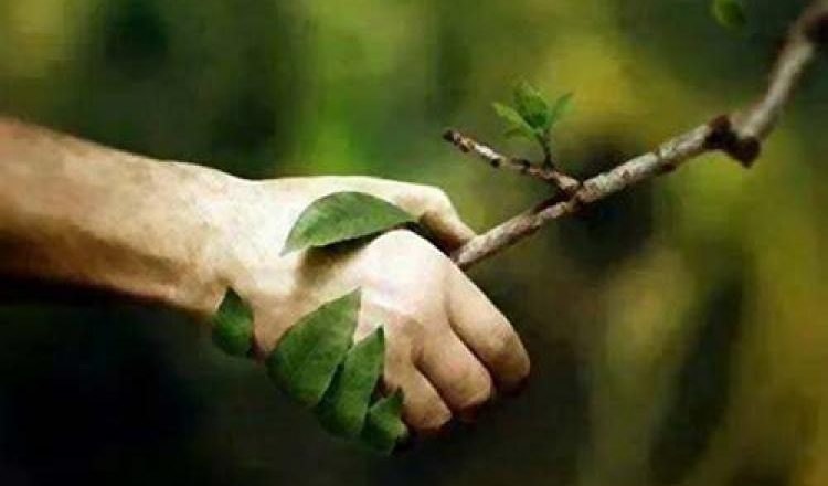 Una lectura de ciego de la encíclica ecológica <i>Laudato Si'</i>