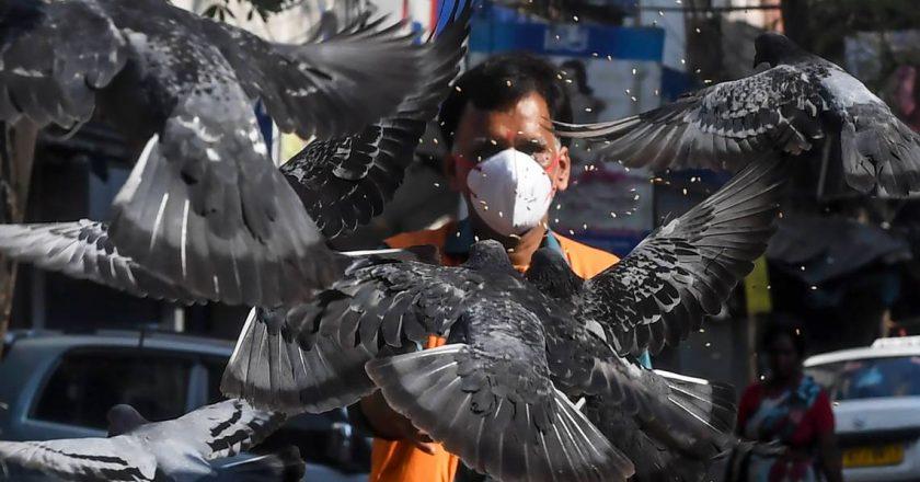 <strong>Los pájaros del encierro</strong>