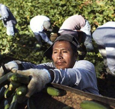 La tragedia de los indígenas migrantes por el Covid 19 en EU
